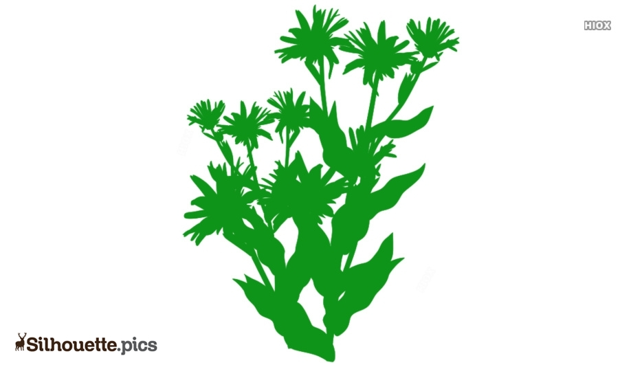 Free Aster Flowers Silhouette