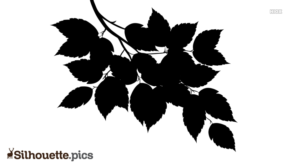 Leaves Silhouette Images, Pics