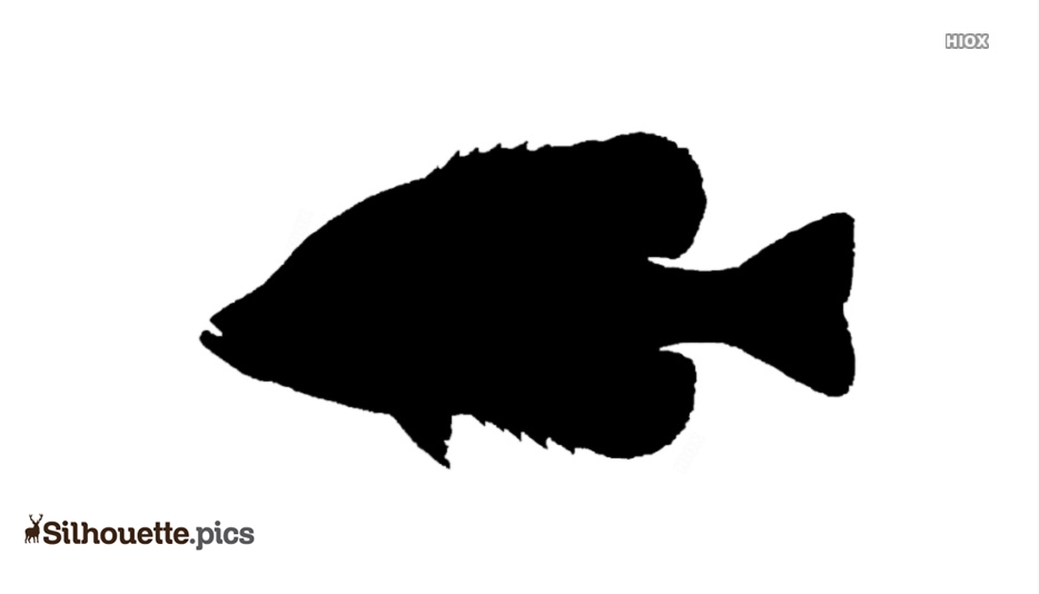 Freshwater Fish Silhouette Illustration
