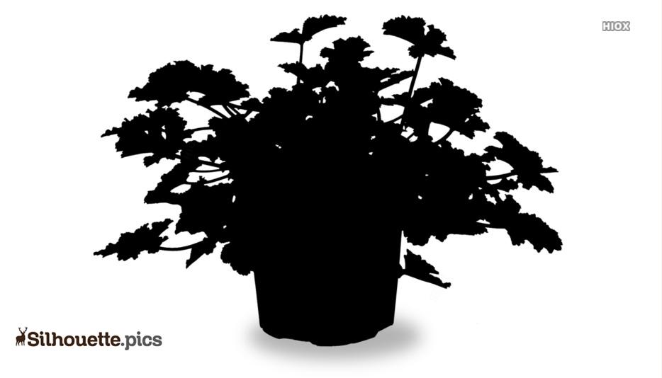 Geranium Flowers Silhouette Background