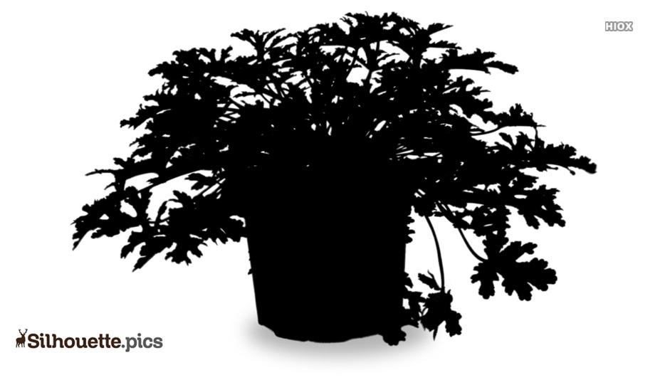 Geranium Flowers Silhouette Clipart