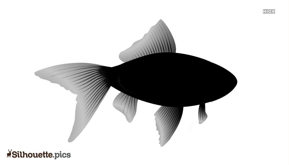 Goldfish Silhouette Illustration
