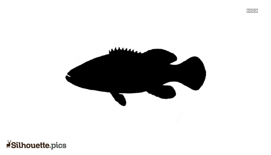 Goliath Grouper Fish Silhouette Background