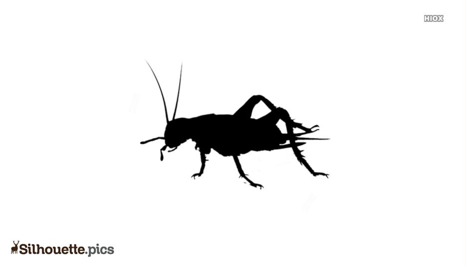 Grasshopper Beetle Silhouette Background