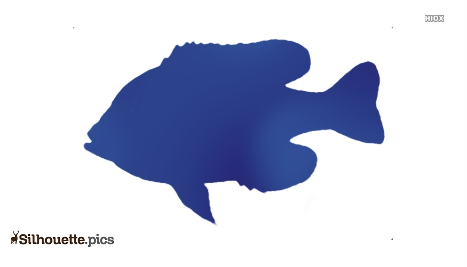 Exotic freshwater fish Silhouette Vector, Clipart Images