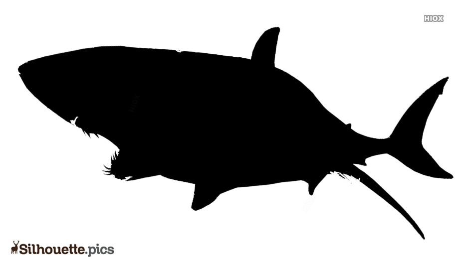 Great White Shark Silhouette Clipart