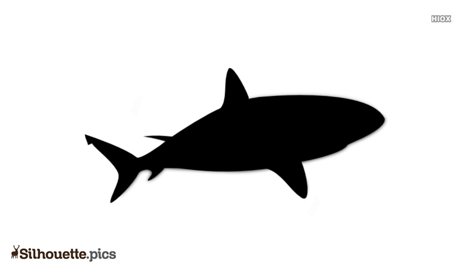 Great White Shark Silhouette Image