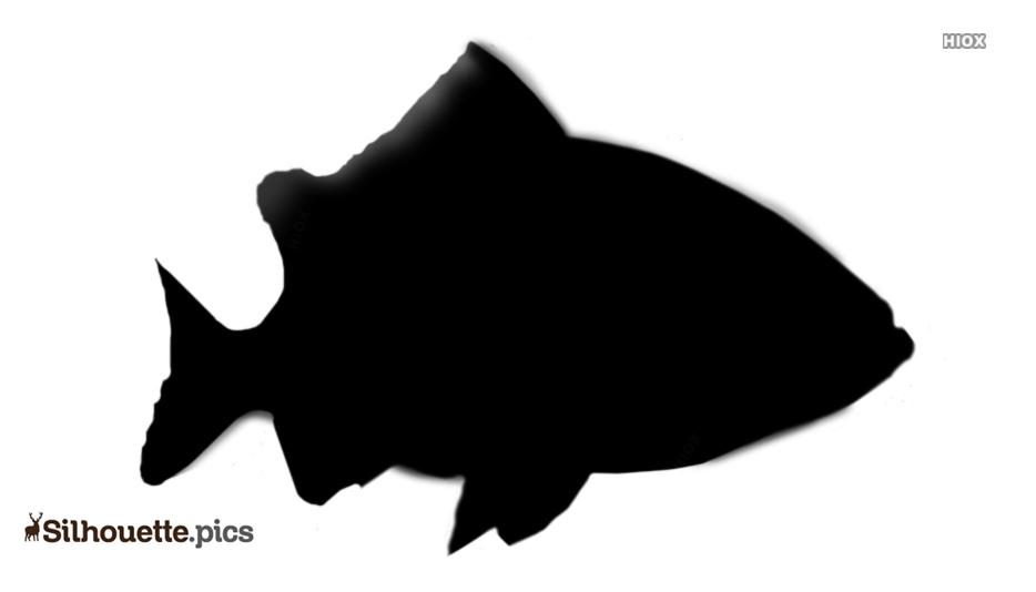 Grouper Fish Silhouette Art