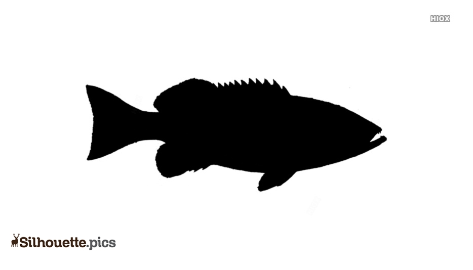 Grouper Fish Silhouette Background