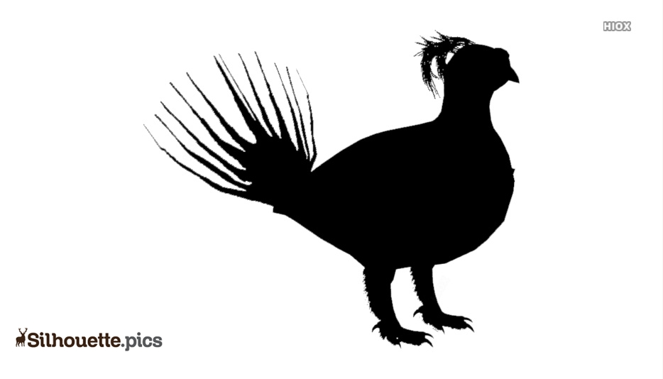 Grouse Silhouette Images