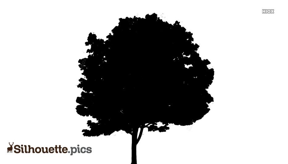 Gulmohar Tree Silhouette
