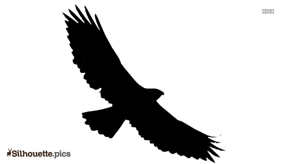 Hawk Bird Silhouette Drawing