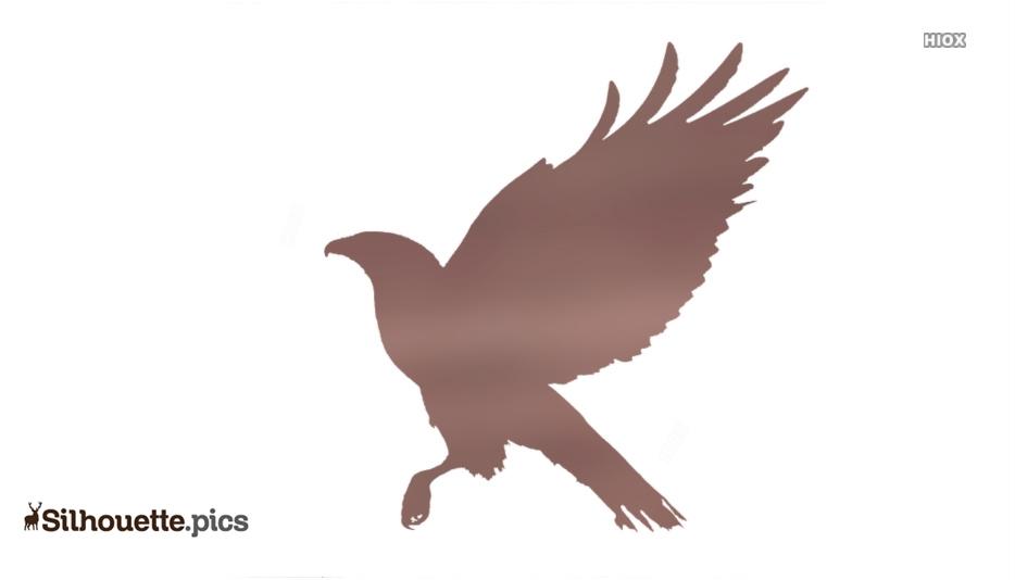 Hawk Bird Silhouette Image