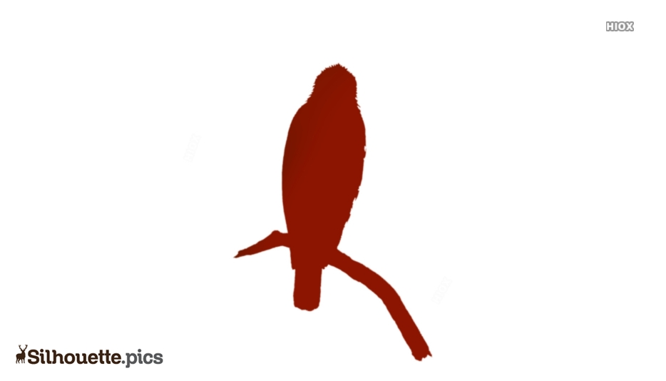 Hawk Bird Silhouette Vector And Graphics