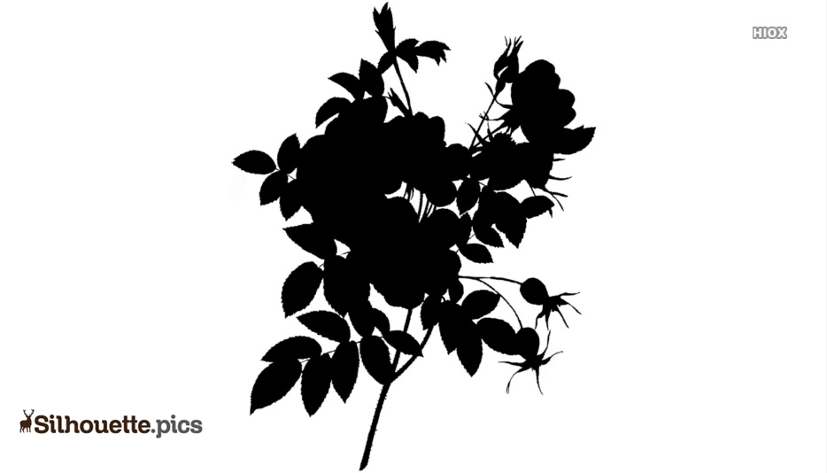 Hawthorn Flower Silhouette Image And Vector
