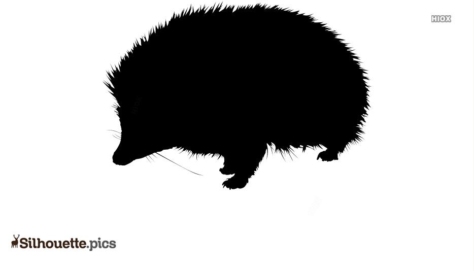 Hedgehog Silhouette Vector Image