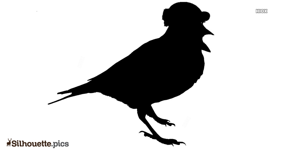 Bird Silhouette Clipart Images, Pictures