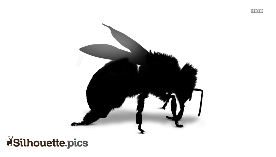 Insect Bee Silhouette