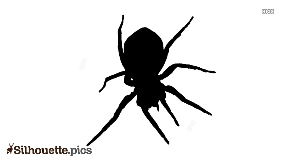 Spider Silhouette Images
