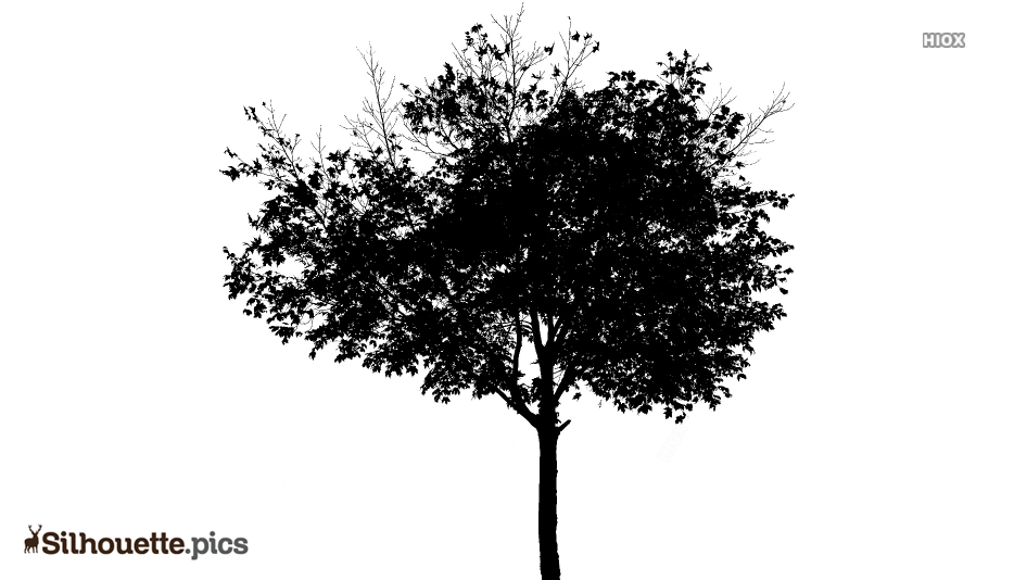 Isolated Tree Logo Silhouette For Download