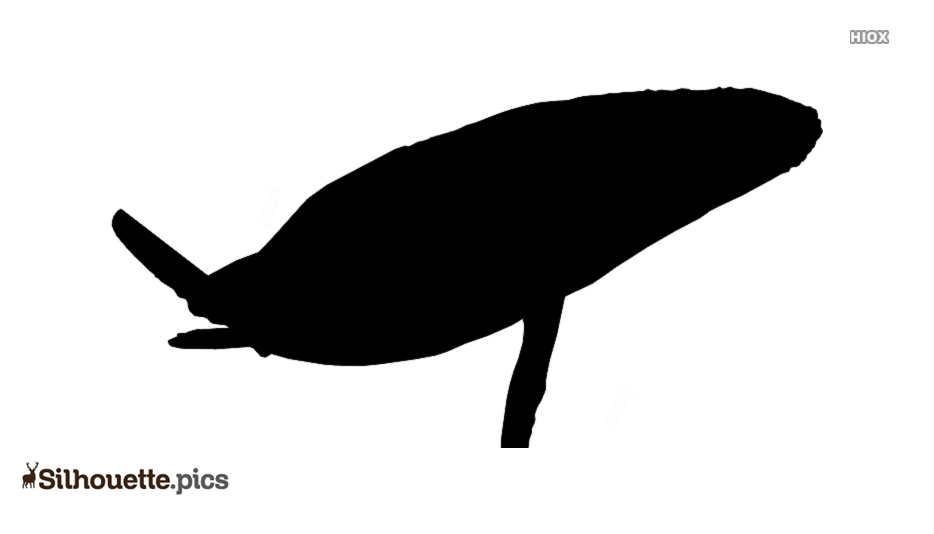 Jumping Whale Silhouette Free Vector Art