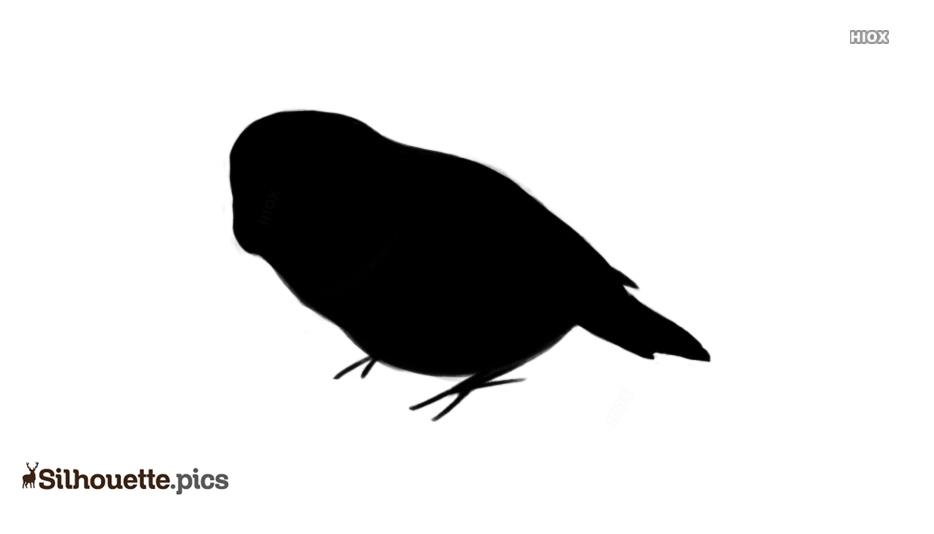 Kakapo Silhouette Vector