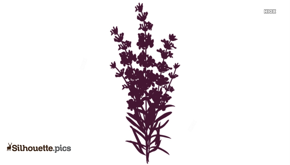 Lavender Flower Silhouette Drawing