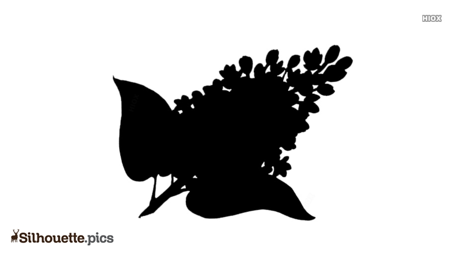 Lilac Pic Silhouette