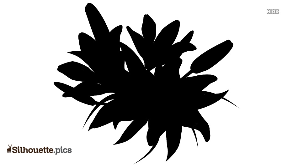 Lilly Flower Silhouette Free Vector Art