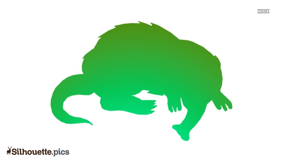 Long Nosed Shrew Silhouette Image