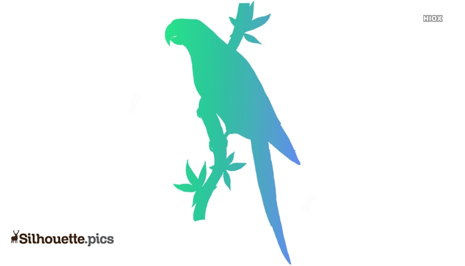 Macaw Clipart Symbol Silhouette