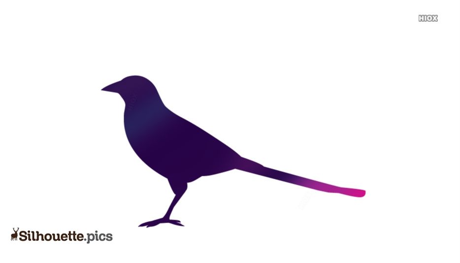 Magpie Bird Silhouette Icon