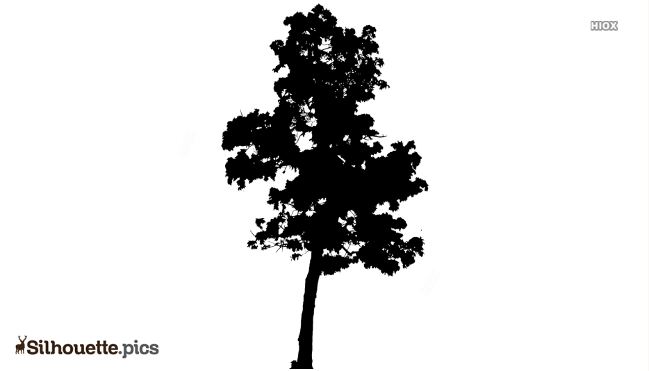Mahogany Tree Silhouette Vector And Graphics