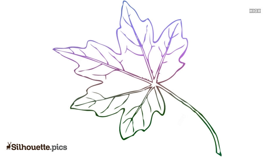 Maple Leaf Silhouette Free Vector Drawing