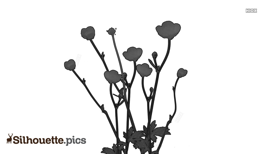 Plant Silhouette Images