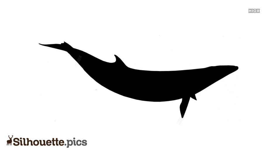 Minke Whale Silhouette