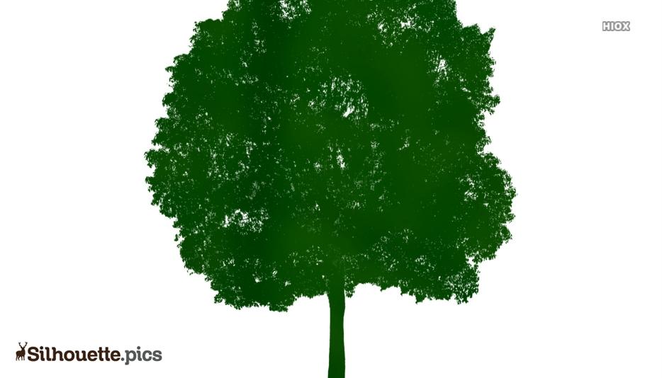 Neem Tree Clipart Silhouette