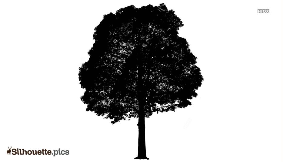 Neem Tree Silhouette Clip Art