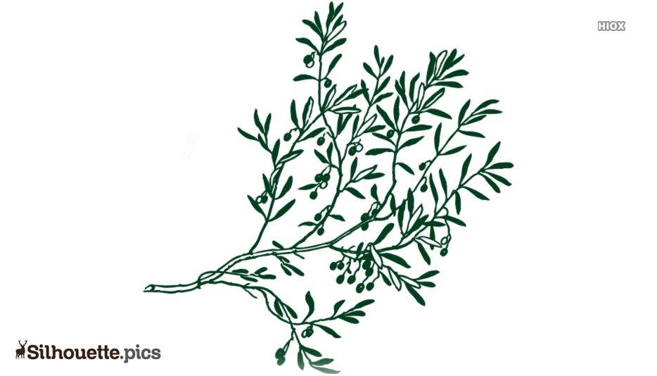 Olive Leaves Silhouette Picture