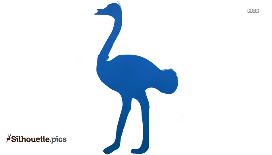 Ostrich Silhouette Drawing