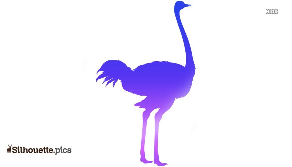 Ostrich Silhouette Image