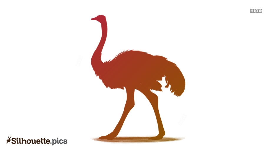Ostrich Silhouette Images, Pictures