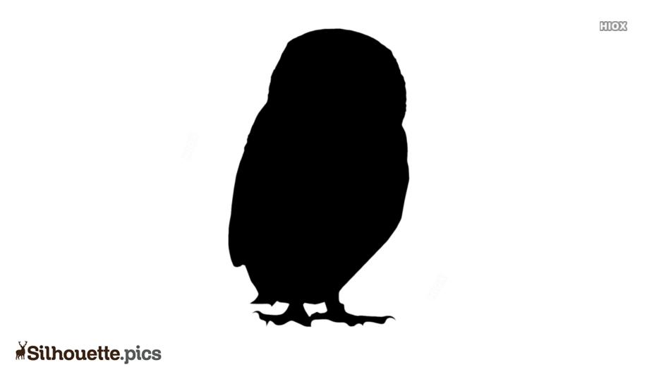 Owl Bird Silhouette Free Vector Art
