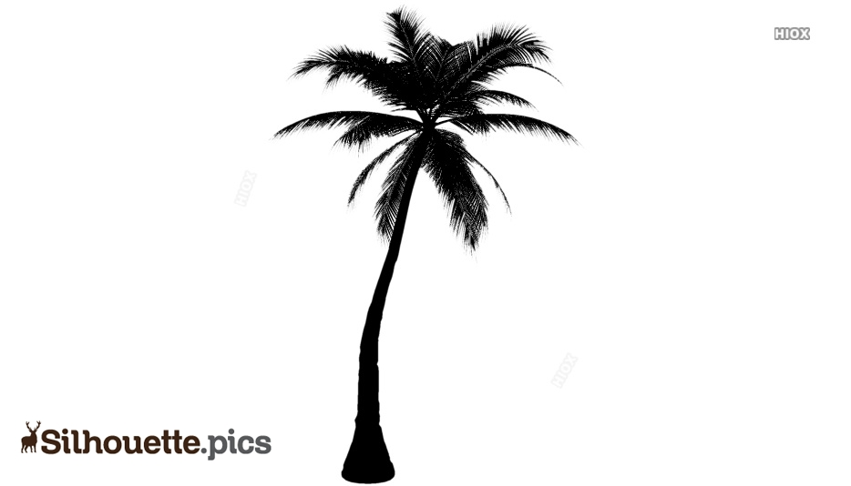 Palm Tree Black and White Drawing