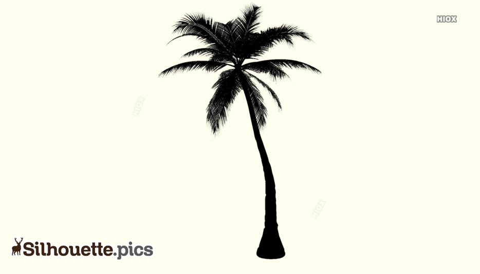 Palm Tree Silhouette Outline