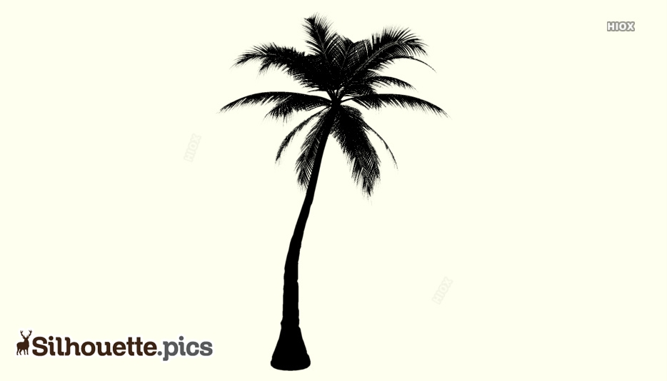 Palm Tree Silhouette Photo