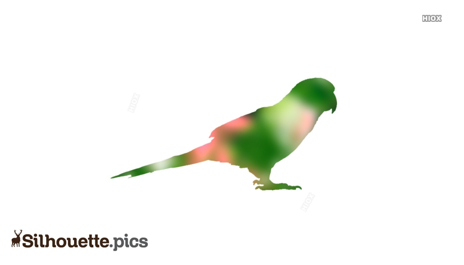 Parrot Silhouette