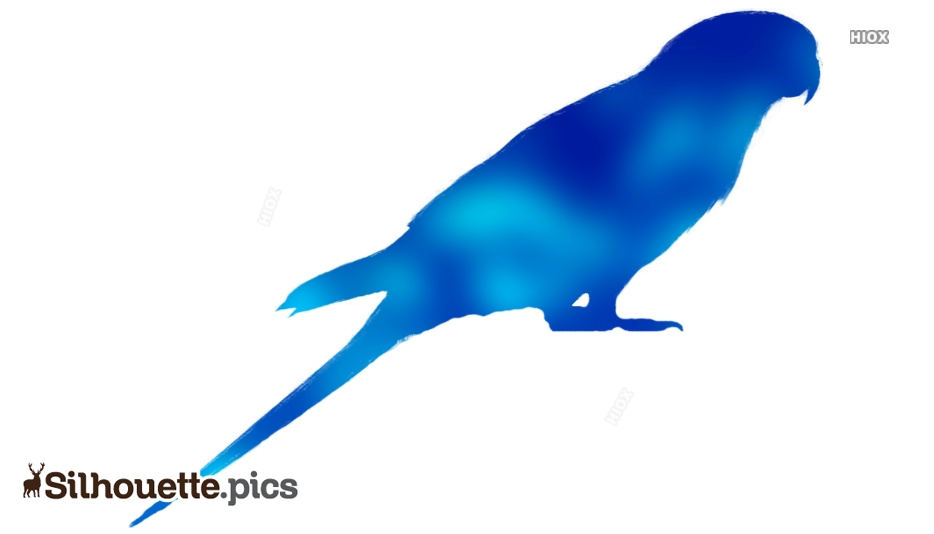 Parrot Silhouette Images