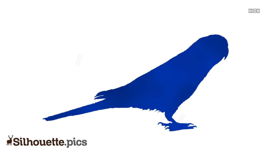 Parrot Silhouette Picture Download