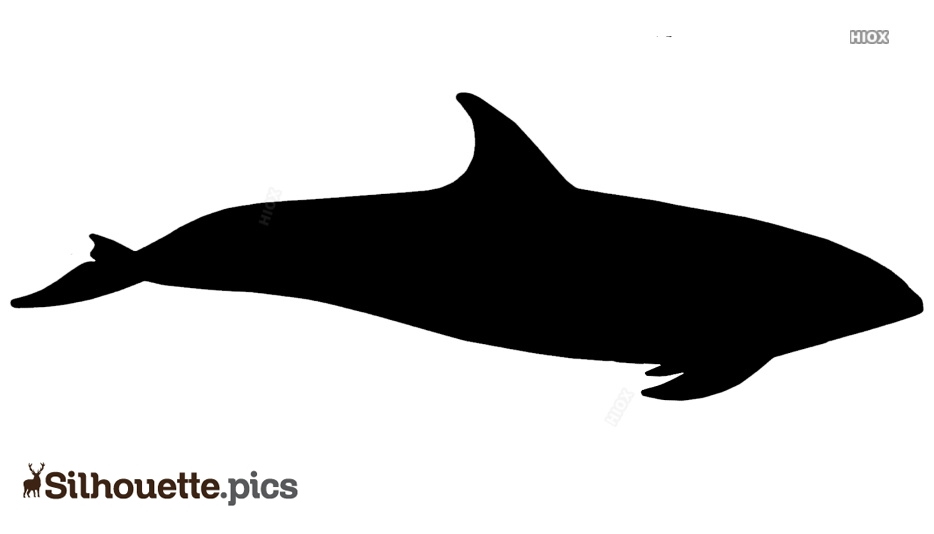 Peales Dolphin Silhouette